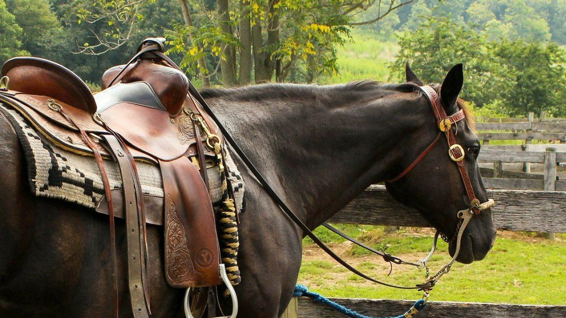 Zoom sur le tapis de selle pour le cheval